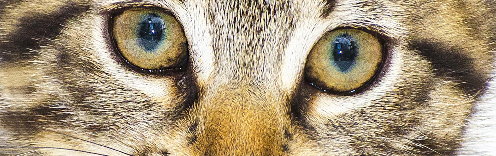 Sterilisatie en castratie kat